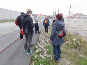 Deltagerne studerer den sjældne giftig kronvikke ved Dokvej.