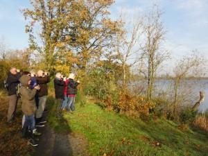 Svanerne i Karlsgårde Sø bliver studeret.