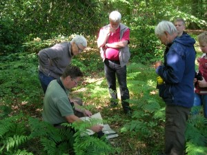 Skovfoged Jens Hjerrild Hansen fortæller om floraen.